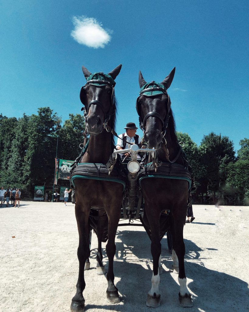 Horses at Schonbrunn